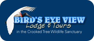 Bird's Eye View Lodge